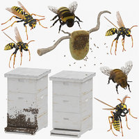 3D model bees wasps hives