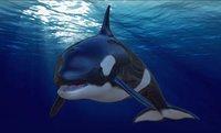 3D rigged orca model