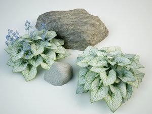 brunnera macrophylla jack frost 3D