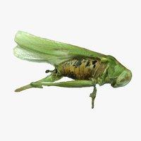3D model scan grasshopper
