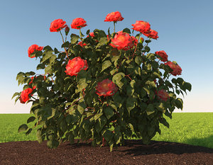3D model realistic rose bush