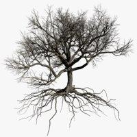 oak dry 3 tree 3D model