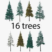 conifer pack tree 3D model