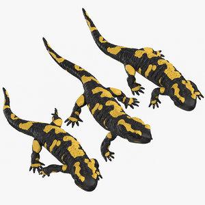 salamander poses 3D model