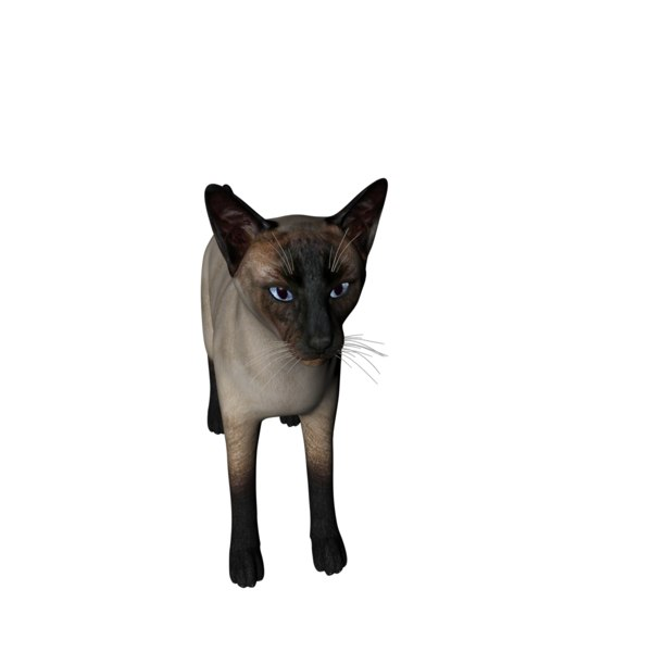 3D model siamese cat rigged