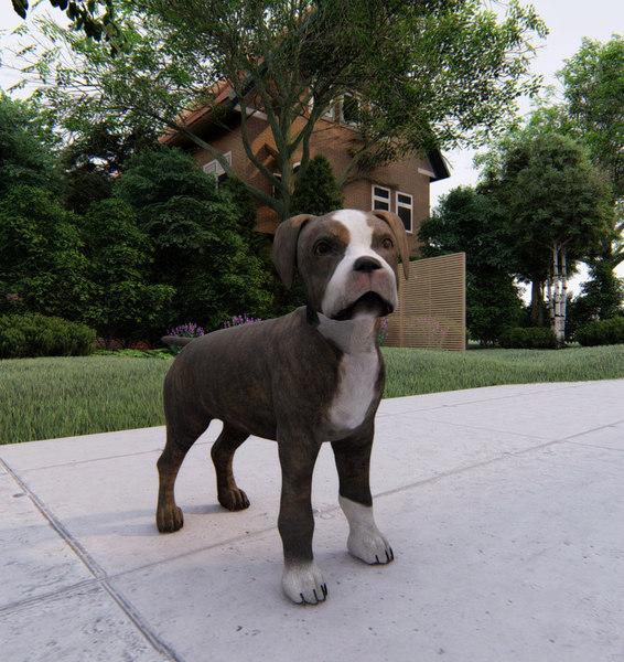 pup staffordshire 3D model