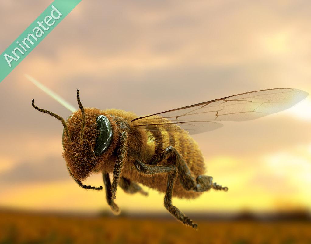 3D honeybee bee