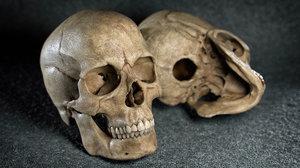 3D model skull details