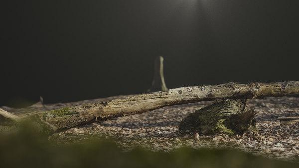 rotten tree wood 3D model