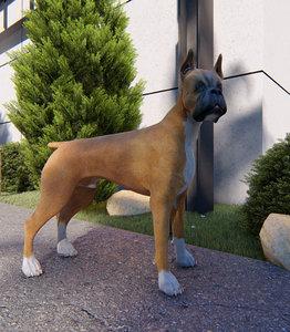 3D boxer dog