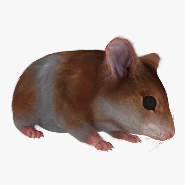 3D hamster rigging animation fur