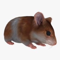3D hamster rigging animation fur
