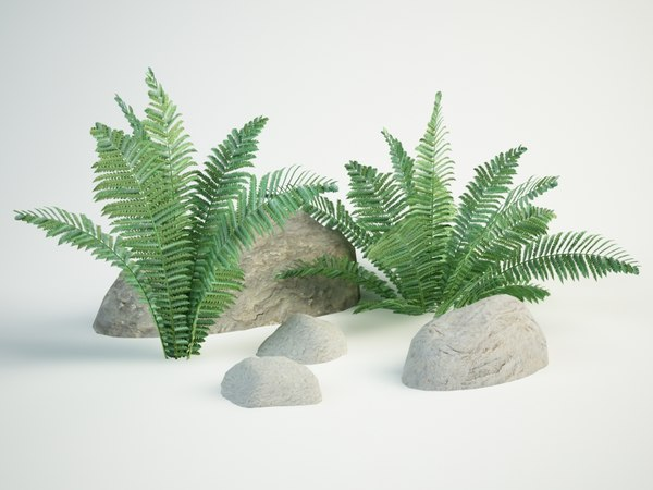 ostrich fern 3D model