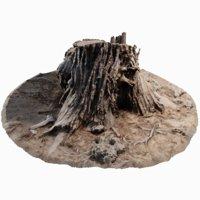 cedar tree stump model
