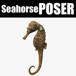 seahorse sea horse 3D model