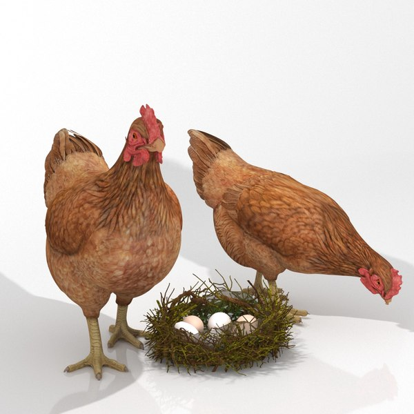 3D chicken nest eggs model