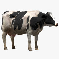 cow dairycow dairy 3D model