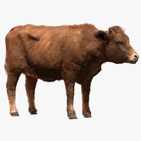 cow cattle livestock 3D model
