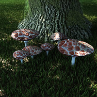 fungus set mushrooms 3D model