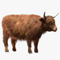 3D cow cattle livestock model