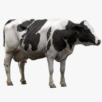 cow dairy nofur 3D model