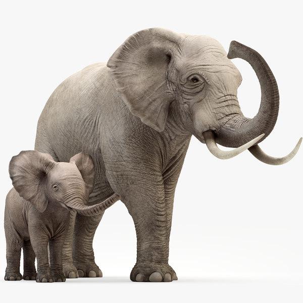 elephant baby rigging animation 3D model