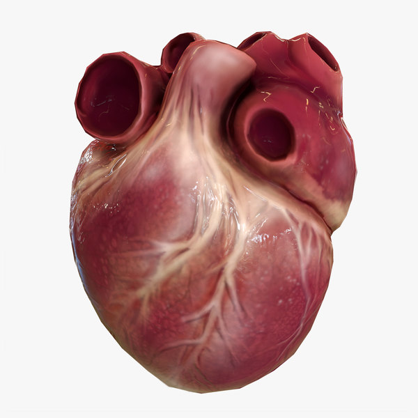 human heart animations 3D model