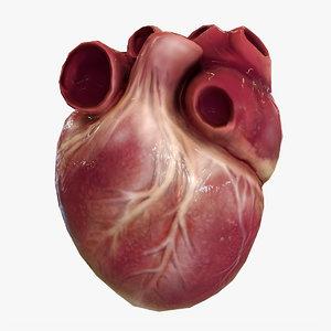 human heart animations 3D model