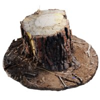 Ponderosa Stump 003