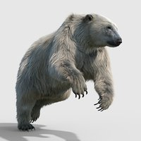 Polar bear (RIGGED) (FUR)