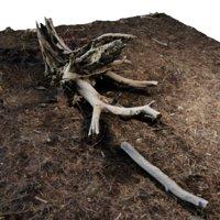 Rotten Stump 001