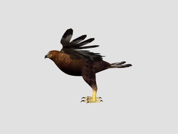 animations eagle 3D model