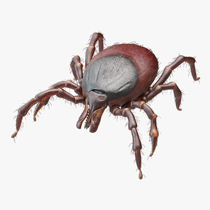 tick bite animation model