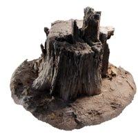 Rotten Stump 002