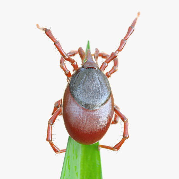 tick grass animation 3D model