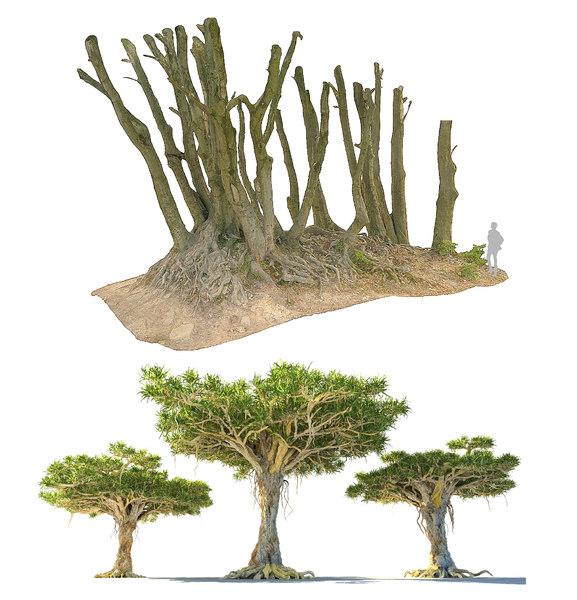 forest ultra hd 16k 3D