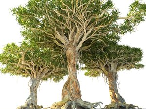 3D model dragon tree pack hd