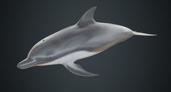 dolphin 1b 3D model