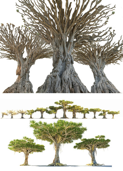 dragon tree pack model