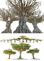 dragon tree pack model