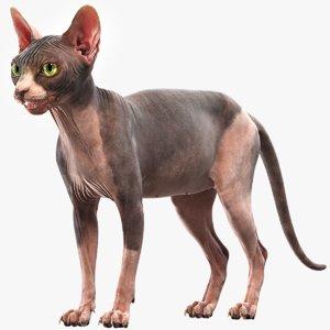 sphynx cat 3D