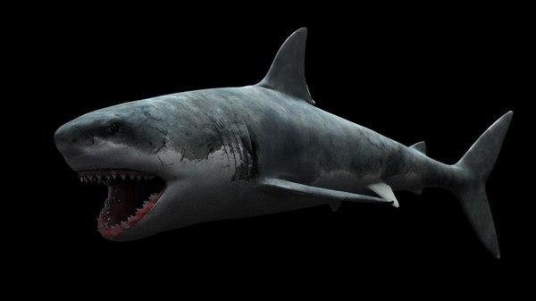 white shark model