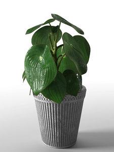 3D peperomia plant pot model