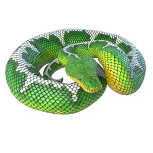 3D emerald tree boa reptile