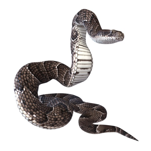 puff adder reptile animation 3D model