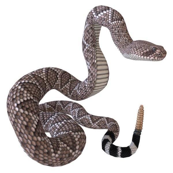 3D western diamondback rattlesnake reptile