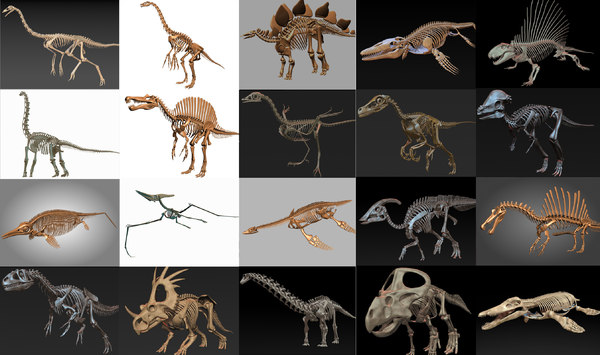 18 in1 dino skeleton model
