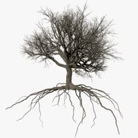 3D oak dry 4 tree