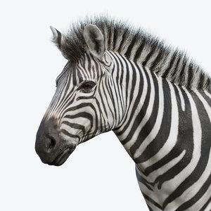 3D model realistic zebra