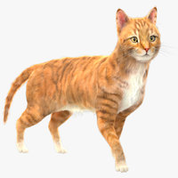 Yellow Cat (Fur) (Rigged)